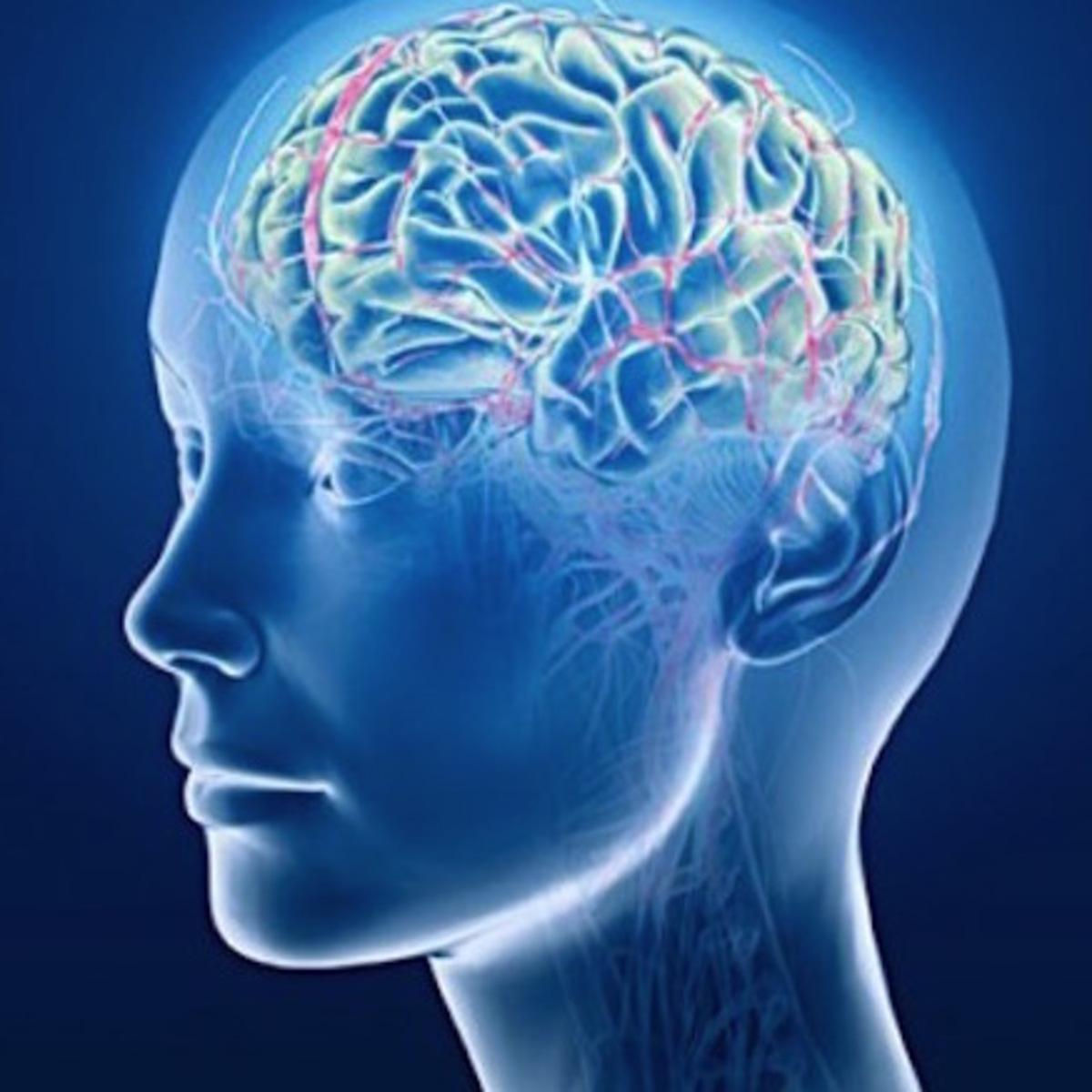 Sales Management Brain